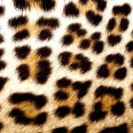 Леопардовый принт в интерьере